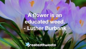 A flower is an educated weed. - Luther Burbank