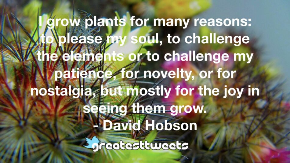 I grow plants for many reasons: to please my soul, to challenge the elements or to challenge my patience, for novelty, or for nostalgia, but mostly for the joy in seeing them grow. - David Hobson