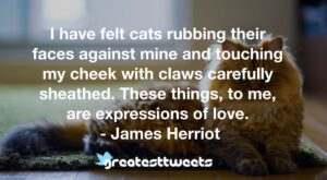 I have felt cats rubbing their faces against mine and touching my cheek with claws carefully sheathed. These things, to me, are expressions of love. - James Herriot